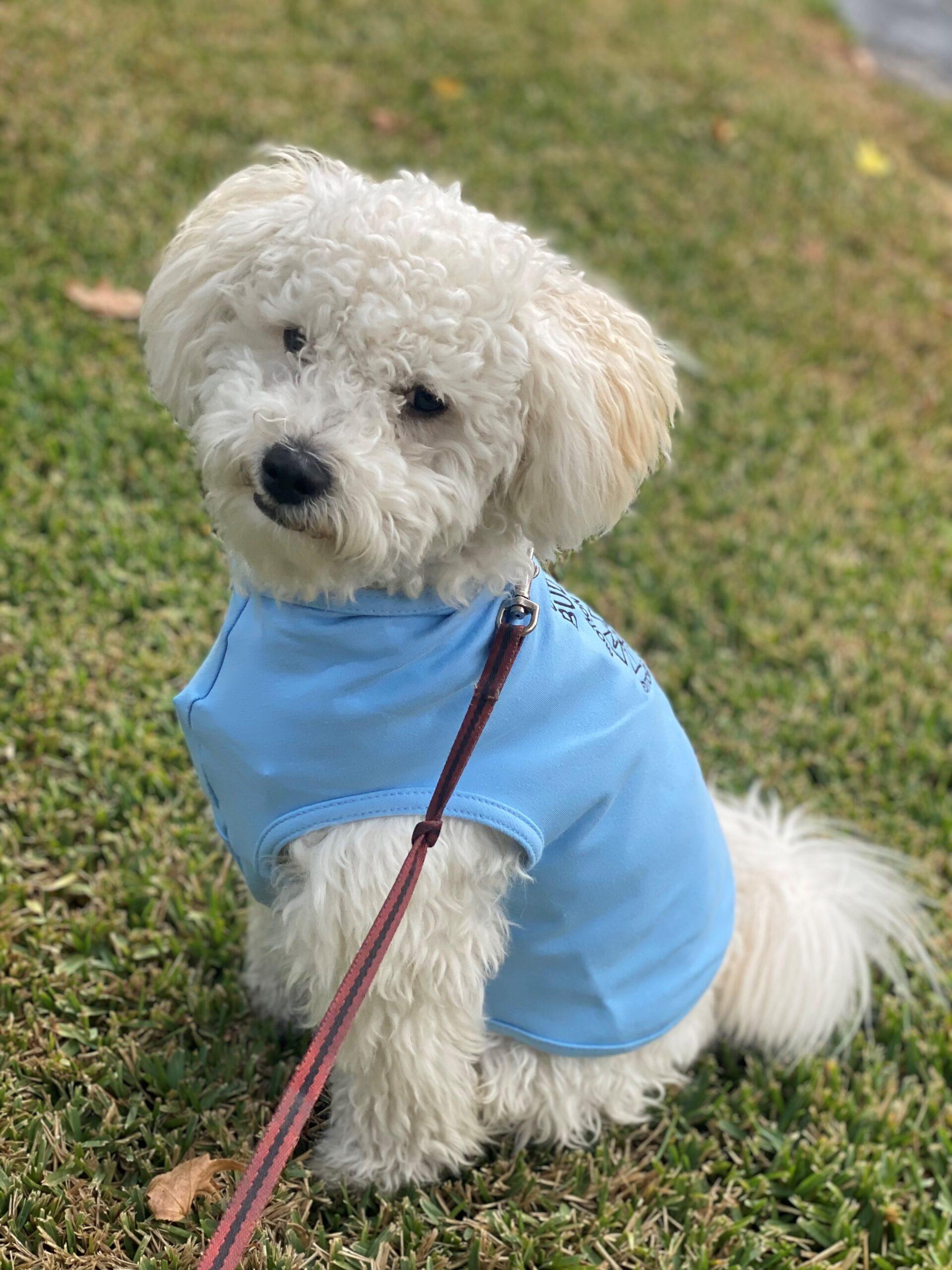 Doggy Union Buddy T-shirts